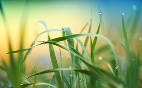 Picture summer, grass, nature, meadow