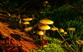 Picture forest, mushrooms, family