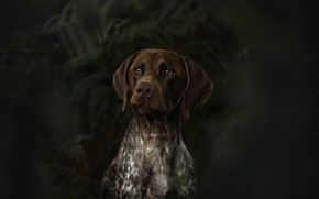 Picture look, face, leaves, the dark background, portrait, dog, fern
