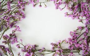 Picture flowers, background, frame, flowers, purple, violet, frame