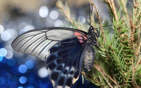 Picture branches, background, butterfly, wings, spruce, bokeh