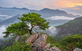 Picture clouds, landscape, mountains, nature, fog, tree, rocks, forest, pine, South Korea