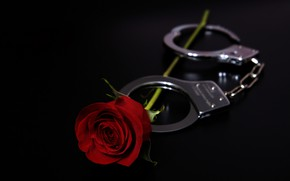 Picture holiday, rose, handcuffs, Valentine's day