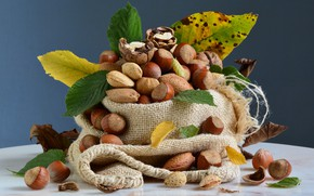 Picture food, nuts, still life, a lot, hazelnuts, composition