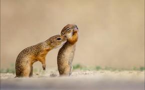 Picture animal, chipmunks, George Sharp