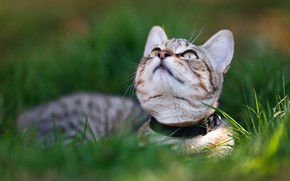 Picture cat, grass, look, face, kitty, lies, looking up