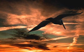 Picture the sky, clouds, flight, sunset, clouds, bird, paint, heaven, wings, the scope, Pelican, large