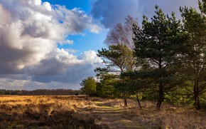 Picture road, field, forest, clouds, pine, path, the forest