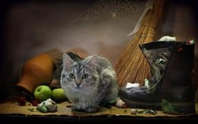 Picture cat, cat, leaves, animal, apples, web, mouse, burlap, garlic, boots, pot, broom, Kovaleva Svetlana, Svetlana …