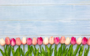 Picture flowers, tulips, pink, white, wood, pink, flowers, tulips, spring
