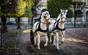 Picture road, autumn, trees, the city, the building, horses, horse, pair, wagon, team, white, riding, two …
