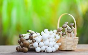 Picture green, table, background, mushrooms, food, blur, hats, the beam, white, mushrooms, basket, brown, bokeh, mushrooms, …