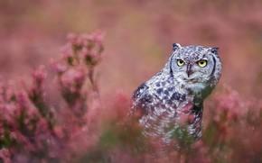 Picture look, flowers, background, pink, owl, bird, glade, portrait, grey, bokeh, owl, motley