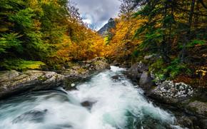 Picture autumn, forest, trees, river, Spain, Spain, Aragon, Aragon, Salenques River, Posets-Maladeta Natural Park