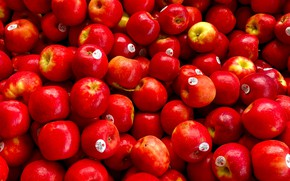 Picture apples, red, a lot