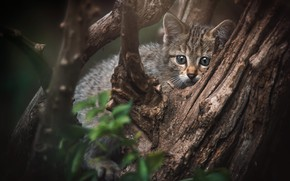 Picture cat, pose, kitty, tree, baby, wild, forest
