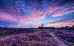 Picture field, the sky, clouds, trees, sunset, flowers, nature, lilac, dal, the evening, meadow, space, track, …