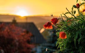 Picture the sun, light, sunset, flowers, house, rain, Maki