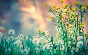 Picture field, nature, flowers