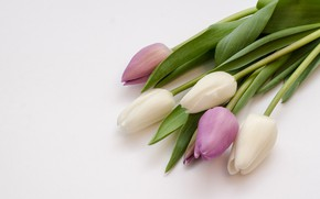 Picture flowers, purple, tulips, white, white, flowers, tulips, purple, violet