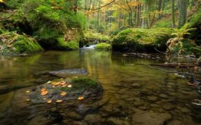 Picture forest, Czech Republic, river