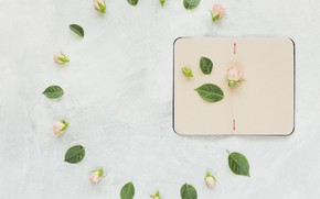 Picture background, roses, Notepad, pink, buds