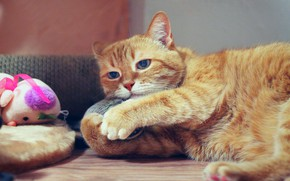 Picture cat, cat, look, face, pose, comfort, house, background, toy, paws, red, lies, pillow, boredom, unhappy, …