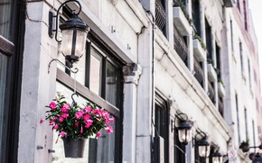 Picture flowers, street, bulding