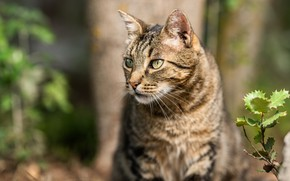Picture cat, cat, look, face, nature, grey, background, tree, plant, portrait, striped, bokeh