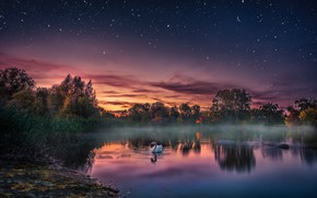 Wallpaper sunset, lake, bird, the evening, Swan, starry sky