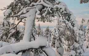 Picture winter, trees, landscape, nature, snow