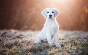 Picture frost, white, grass, look, rays, light, nature, pose, background, glade, dog, morning, baby, puppy, face, …