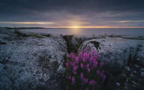 Picture landscape, nature, stones, dawn, shore, vegetation, morning, Lake Ladoga, Karelia, Ladoga, Rev Alex, Ladoga skerries