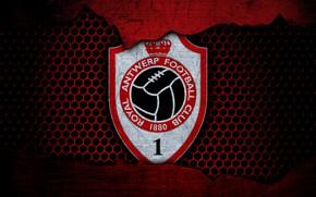 Picture wallpaper, sport, logo, football, Antwerp