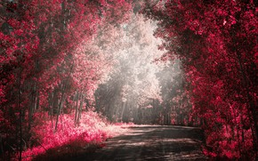 Picture road, forest, paint, filter