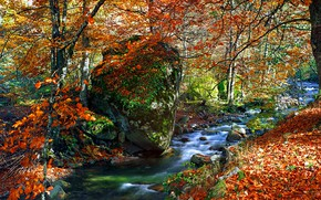 Picture autumn, forest, leaves, trees, Park, river, colorful, forest, landscape, park, autumn, leaves, tree, fall