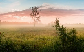 Picture field, forest, summer, the sky, grass, clouds, landscape, branches, nature, fog, tree, dawn, foliage, morning, …