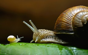 Picture family, house, grape snail