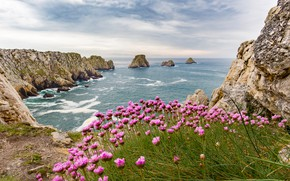 Picture sea, summer, clouds, flowers, stones, rocks, shore, coast, France, surf, pink, Brittany