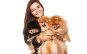 Picture dogs, girl, smile, Spitz