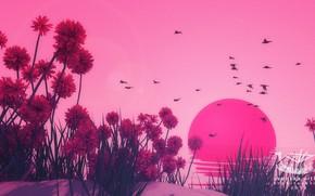 Picture Sunset, Flowers, The sun, Birds, Sunset, Environments, Jay Kubisch, Swedish garlic, by Jay Kubisch