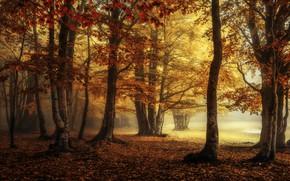 Picture autumn, forest, fog, Park, foliage, the colors of autumn, Golden autumn, the crimson