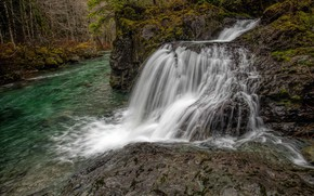 Picture forest, trees, river, stones, waterfall, moss, Gordon River