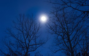 Picture the sky, stars, trees, night, nature, the moon, the full moon