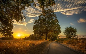 Picture road, field, trees, sunset