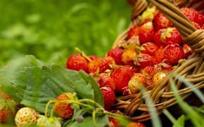 Picture summer, grass, berries, strawberries, basket