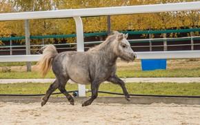 Picture horse, pony, horses horses