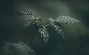 Picture Leaves, Plant, Plants, Flora, Plants, Close-up, Flora, Plant, Sheets, by Daniel Spase, Daniel Spase
