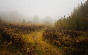 Wallpaper autumn, fog, morning