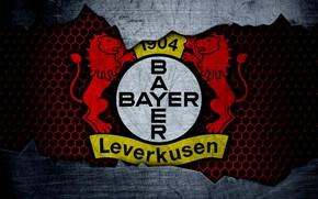 Picture wallpaper, sport, logo, football, Bayer Leverkusen